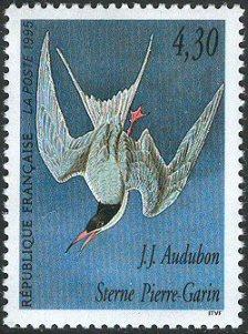 Name:  bird3.jpg Views: 2451 Size:  27.2 KB