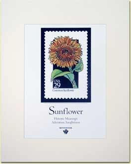 Name:  Sunflower-Poster.jpg Views: 284 Size:  7.7 KB