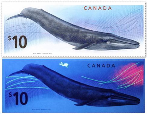 Name:  Tem ca voi Canada.jpg Views: 1491 Size:  32.0 KB
