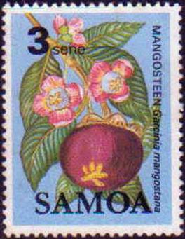 Name:  mang cut samoa.jpg Views: 943 Size:  144.5 KB