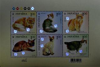 Name:  16-05-08-cat2.jpg Views: 345 Size:  13.8 KB