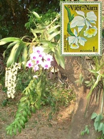 Name:  76 phong lan.jpg Views: 195 Size:  94.9 KB