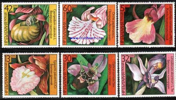 Name:  orchid (1)khong rang.jpg Views: 545 Size:  57.5 KB