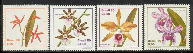 Name:  orchid (4).jpg Views: 439 Size:  33.6 KB