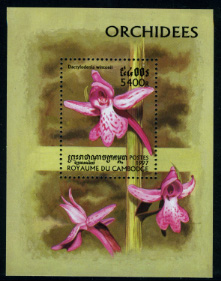 Name:  orchid (5).jpg Views: 448 Size:  54.5 KB