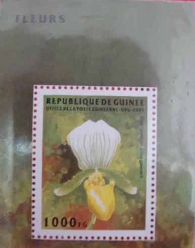 Name:  orchid (9).JPG Views: 546 Size:  21.2 KB