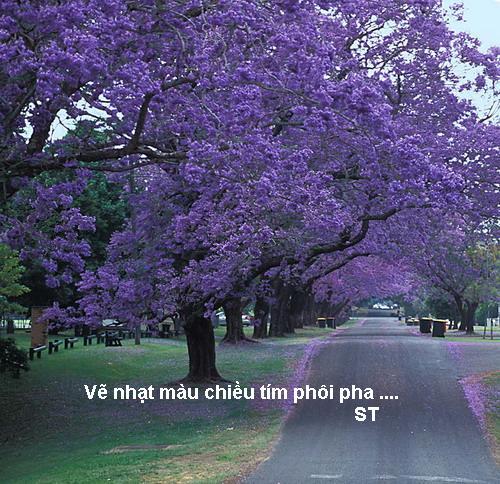 Name:  phuong tim 2_500.jpg Views: 807 Size:  97.6 KB