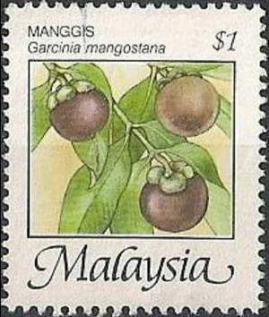 Name:  mang cut malay.jpg Views: 1546 Size:  139.9 KB