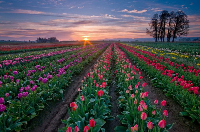 Name:  awesome_tulip04.jpg Views: 215 Size:  164.8 KB