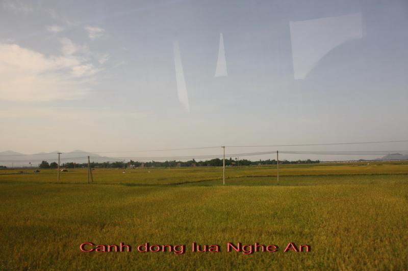Name:  Copy of dong lua Nhge An.jpg Views: 328 Size:  35.2 KB