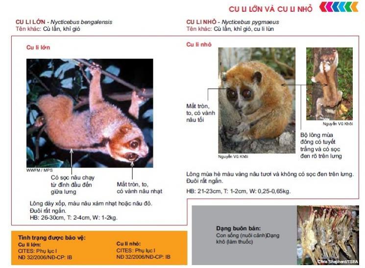 Name:  culi1.jpg Views: 3243 Size:  65.9 KB