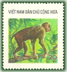 Name:  Khỉ vàng - thu rung 1976.jpg Views: 1357 Size:  25.3 KB