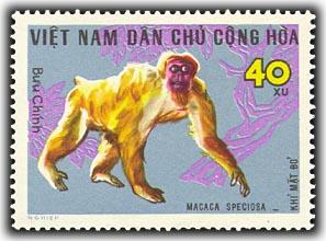 Name:  khỉ mặt đỏ - thurung 1967.jpg Views: 1321 Size:  29.6 KB