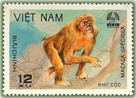 Name:  Khỉ cộc - thurungVQGCphuong 1981.jpg Views: 1457 Size:  27.3 KB