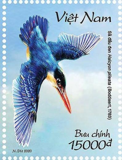 Name:  Chim boi ca - Clear-ngang - Copy.jpg Views: 205 Size:  40.9 KB