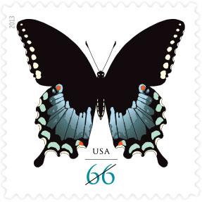 Name:  13-spicebush-swallowtail.jpg Views: 311 Size:  18.9 KB