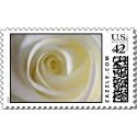 Name:  creamy_white_rose_postage-p172498149025793195l_125.jpg Views: 235 Size:  7.1 KB