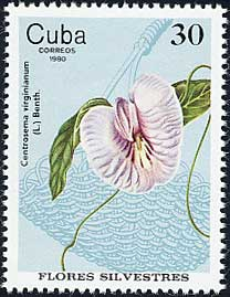 Name:  cuba1980_30c_centrosema_virginianum.jpg