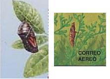 Name:  bướm 4.JPG Views: 5067 Size:  7.3 KB