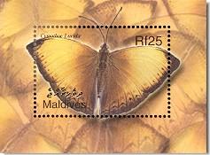 Name:  mld0223ss-cymothoe.jpg Views: 4869 Size:  18.4 KB