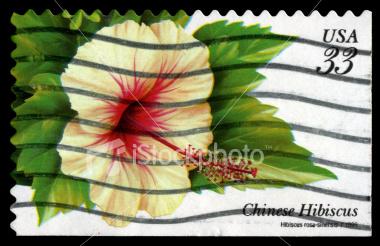 Name: ist2_5743781-hibiscus-postage-stamp.jpg Views: 1235 Size: 66.2 KB