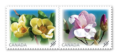 Name:  2013_magnolias.jpg Views: 167 Size:  81.8 KB