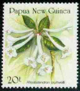Name:  papua_crutwellii.jpg Views: 1022 Size:  6.3 KB