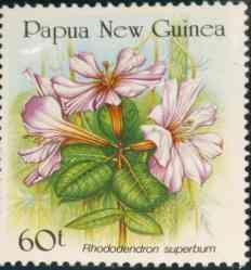 Name:  papua_superbum-.jpg Views: 1034 Size:  6.7 KB